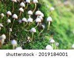 Small Inedible Mushrooms ...