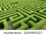 Hedge cut into a maze like...