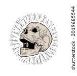 anatomic skull vector art.... | Shutterstock .eps vector #2019685544