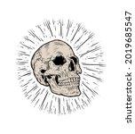 anatomic skull vector art.... | Shutterstock .eps vector #2019685547