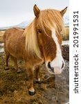 icelandic horse portrait | Shutterstock . vector #201991531