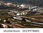 Stunning Rice Terraces Scenery...