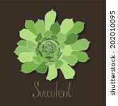 succulent | Shutterstock .eps vector #202010095
