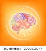 vitamins for brain. essential...   Shutterstock .eps vector #2020610747