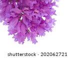 Jacaranda Flowers Isolated On...