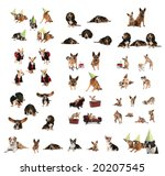 a large group of dogs in one image - stock photo