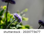Cute Purple Flowers In Summer