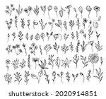 vector organic herbs. set with... | Shutterstock .eps vector #2020914851