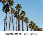 row of palm trees | Shutterstock . vector #20210461