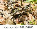 disguised lizard | Shutterstock . vector #202108405