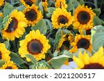 Sunflowers on a market and a...