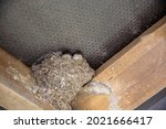 Small Swallows Nest Under Roof
