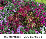 Vibrant And Colorful Garden...