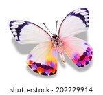 Colorful Butterfly   Isolated...