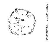Hand Drawing Persian Cat...