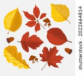 autumn leaves collection....   Shutterstock .eps vector #2022664814