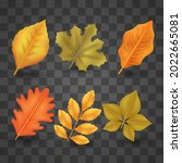 autumn leaves collection....   Shutterstock .eps vector #2022665081