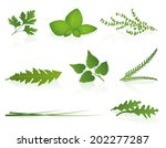 herbs   parsley  basil  thyme ... | Shutterstock .eps vector #202277287