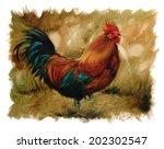 Rooster Vintage Torn Edges