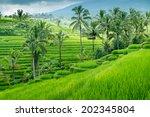 Green Rice Fields On Bali...