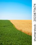 two color field with wheat and... | Shutterstock . vector #2023875674