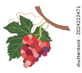bunches of colorful grapes.... | Shutterstock .eps vector #2024222471