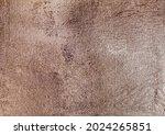 gold  bronze background. rose... | Shutterstock . vector #2024265851