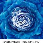 Rose Blue Flower. Floral...