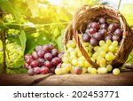 grapes in a basket on a... | Shutterstock . vector #202453771