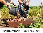 Small Family Farm Harvesting...