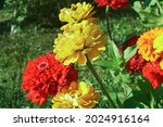 Yellow And Red Flowers. Multi...