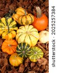 different squash in different...   Shutterstock . vector #2025257384