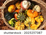 different squash in different...   Shutterstock . vector #2025257387