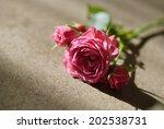 pink roses close up. vintage... | Shutterstock . vector #202538731