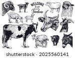 farm animals set. cow  goat ... | Shutterstock .eps vector #2025560141