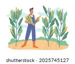 Farmer working on field collecting sweet corn from plants. Agriculture and farming, tenting and growing plants for crops. Cornfield with ripe products. Cartoon character in flat style vector