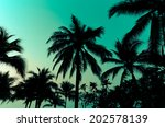 palm trees on the beautiful... | Shutterstock . vector #202578139