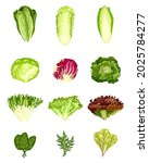 Set Lettuce Isolated On White...