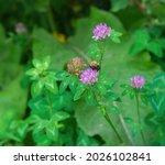Summer Garden  Bumblebee...