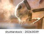 Breathing Horse