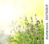 lavender | Shutterstock . vector #202702819
