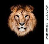 Beautiful Lion On A Black...