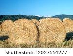 Golden Wheat. Harvesting Bales...