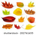 Isolated Leaves. Various Autum...