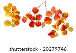 branch of fothergilla leaves... | Shutterstock . vector #20279746