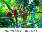 Colorful Red And Blue Macaw...