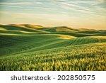 palouse fields in sunset   | Shutterstock . vector #202850575