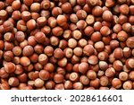 Photo Of Hazelnut. Hazelnut Nut ...