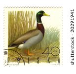 Old polish stamp with a duck - stock photo