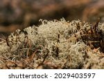 dry northern moss background....   Shutterstock . vector #2029403597